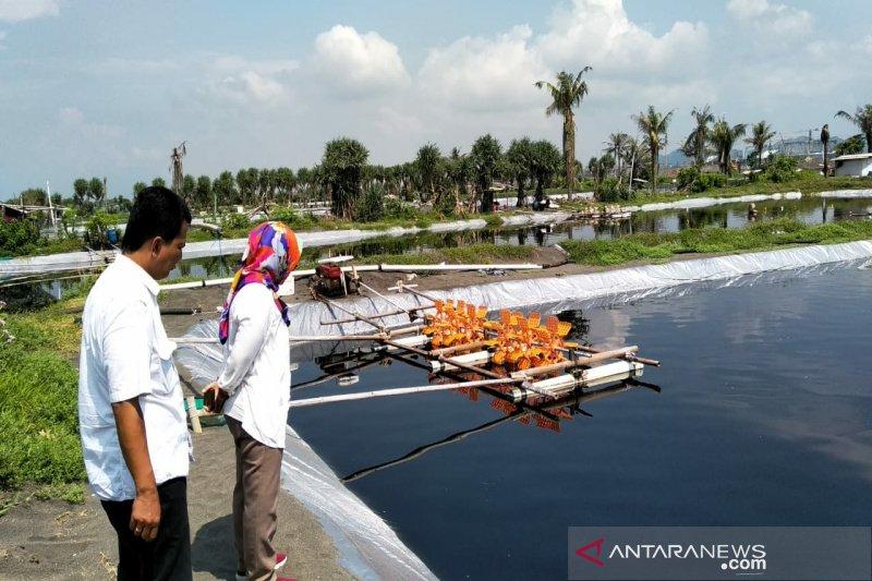 Tambak udang di selatan Bandara Internasional Yogyakarta  aktif