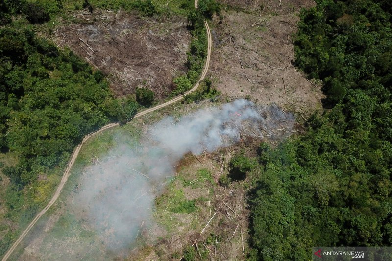 Laju deforestasi hutan alami penurunan
