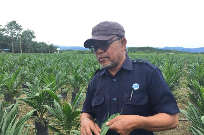 Perusahaan sawit UWTL replanting 350 ha tahun ini