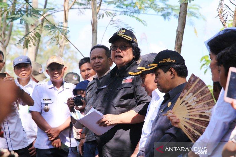 Kunjungan Menteri LHK ke kebun sengon Kabupaten Pulang Pisau