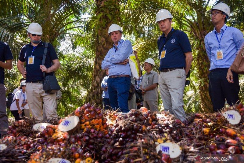 Usai Lebaran harga sawit Riau turun Rp4,88/Kg