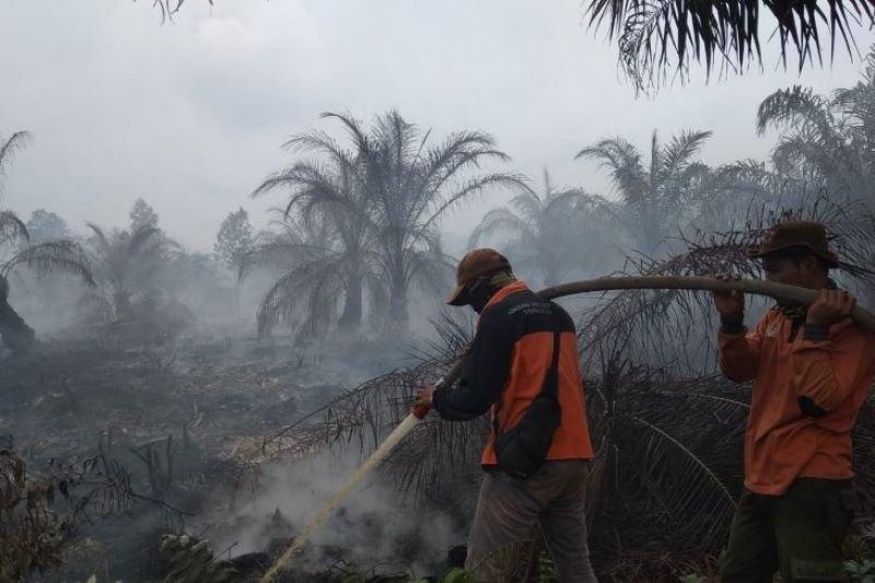 Satgas Karhutla Dumai padamkan 2 titik api saat daerah lain hujan, begini penjelasannya