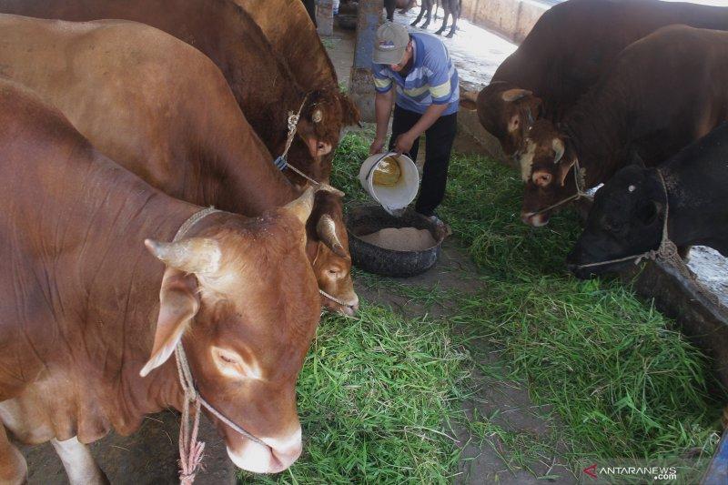 Rumah potong hewan terdampak gempa bumi diperbaiki dengan anggaran Rp200 juta