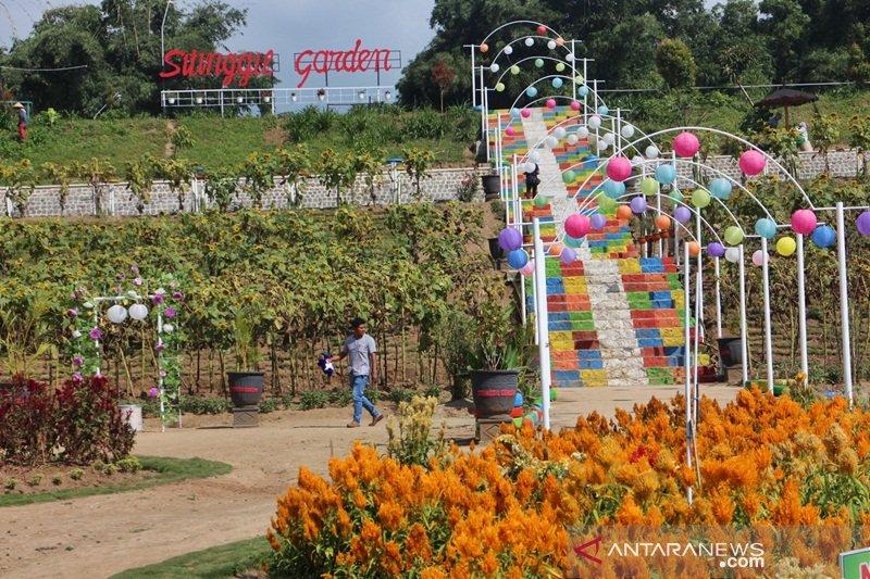 Menikmagti Taman Bunga Sitinggil di lereng Merbabu hanya dengan Rp5.000