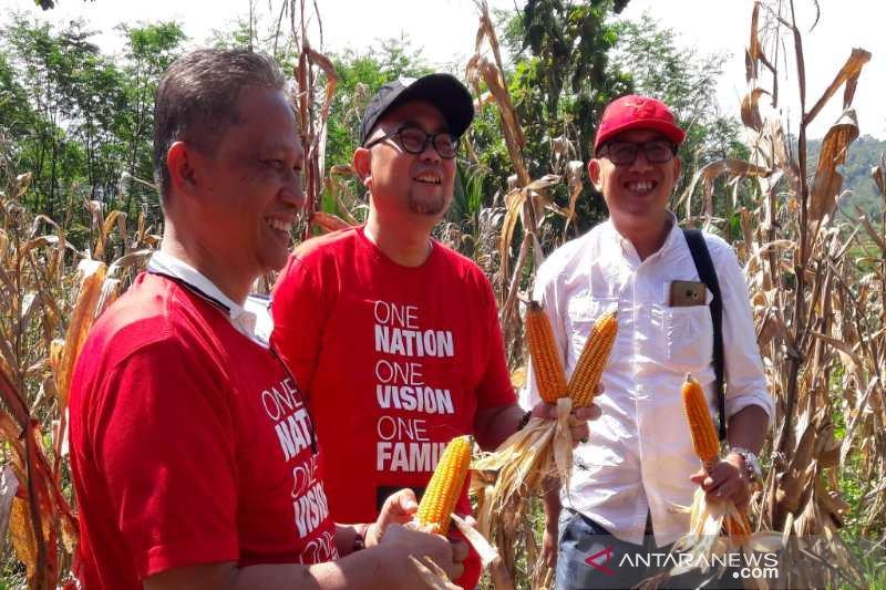 TWC bantu kembangkan budidaya jagung petani Magelang