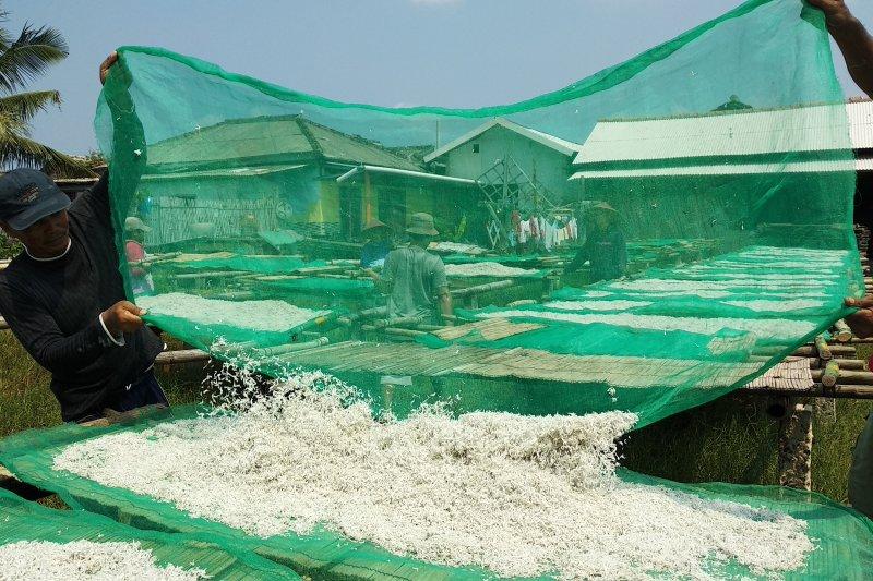 Meski harga turun produsen tetap produksi ikan teri asin