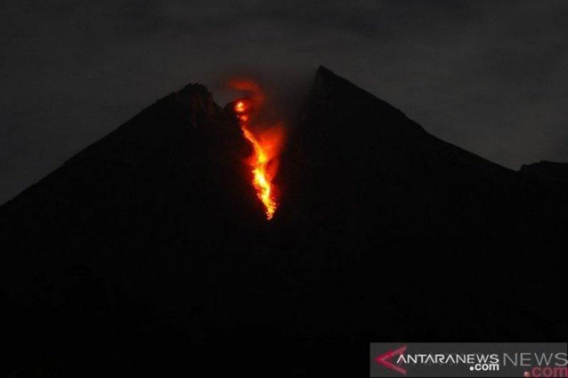 Mt. Merapi spews incandescent lava as far as 870 meters