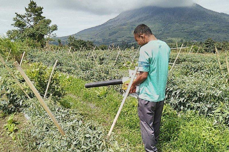 Lahan pertanian warga terpapar erupsi Sinabung dibersihkan