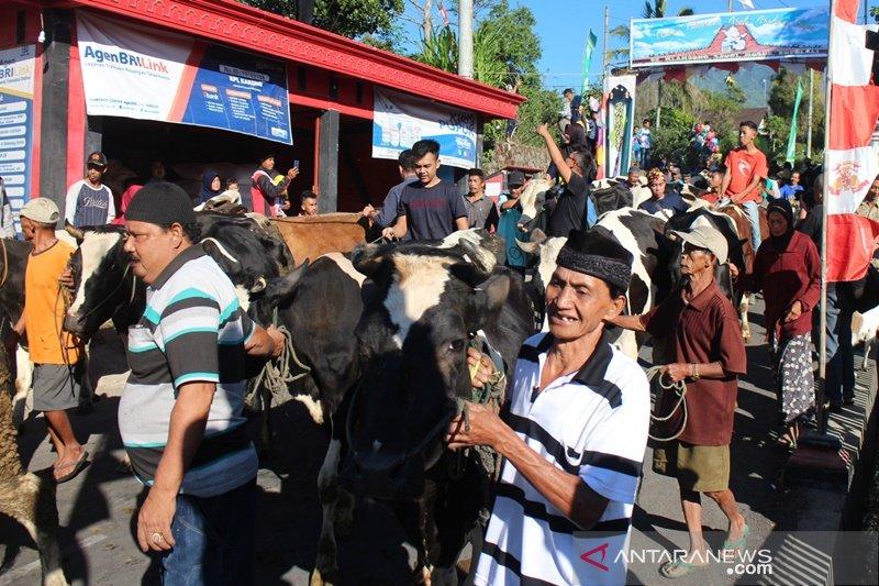 Sapi dan kambing diarak dalam tradisi Syawalan lereng Merapi