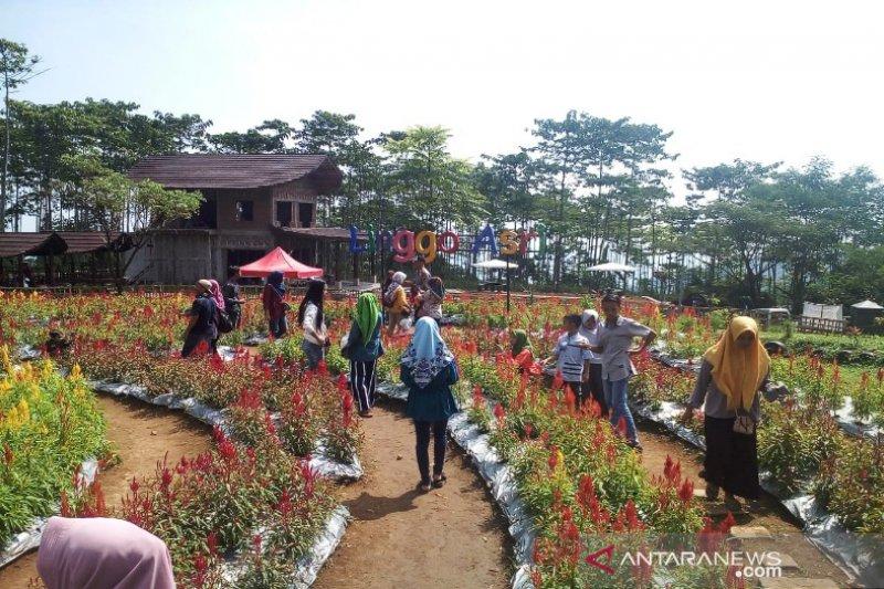 Tata objek wisata Linggasari, Pekalongan ajukan bantuan Rp30 miliar