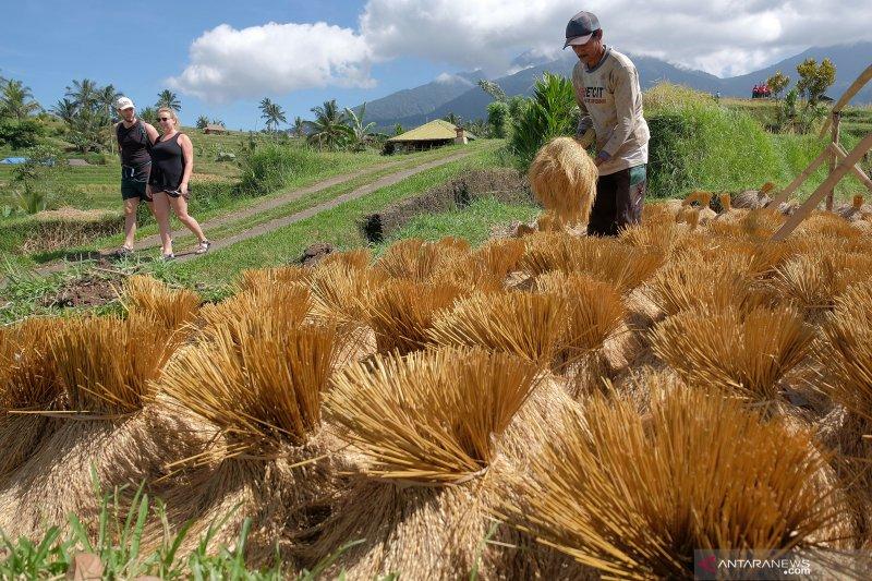 Mendes puji pertanian berbasis pariwisata di Tabanan