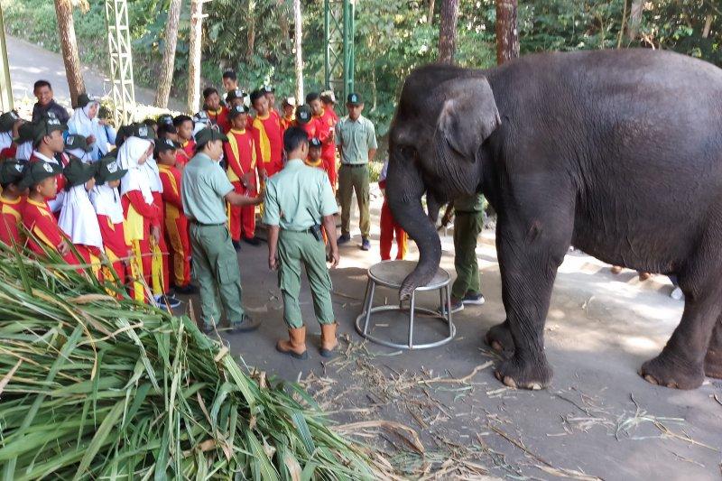 Ratusan siswa SD belajar konservasi hewan dilindungi