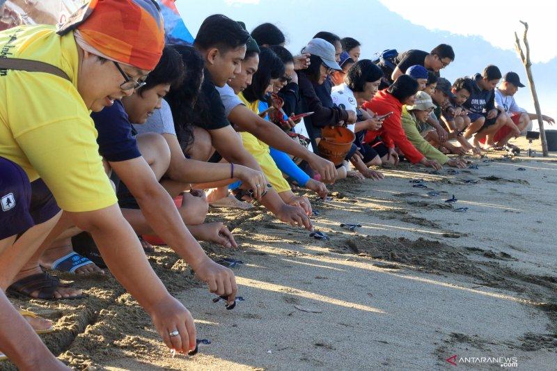 Wisata edukasi konservasi Penyu