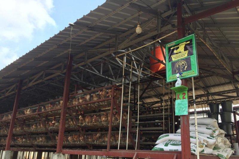 """Kementan-FAO dorong peternak unggas terapkan manajemen """"Biosecurity 3 Zona"""""""