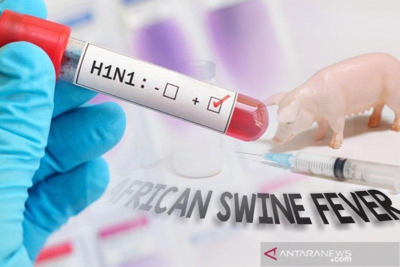 Eijkman: Waspadai flu babi G4 jadi pandemi