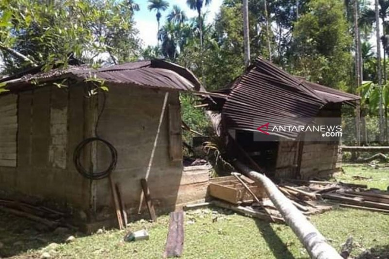 12 ekor gajah mengamuk di permukiman warga Nagan Raya Aceh