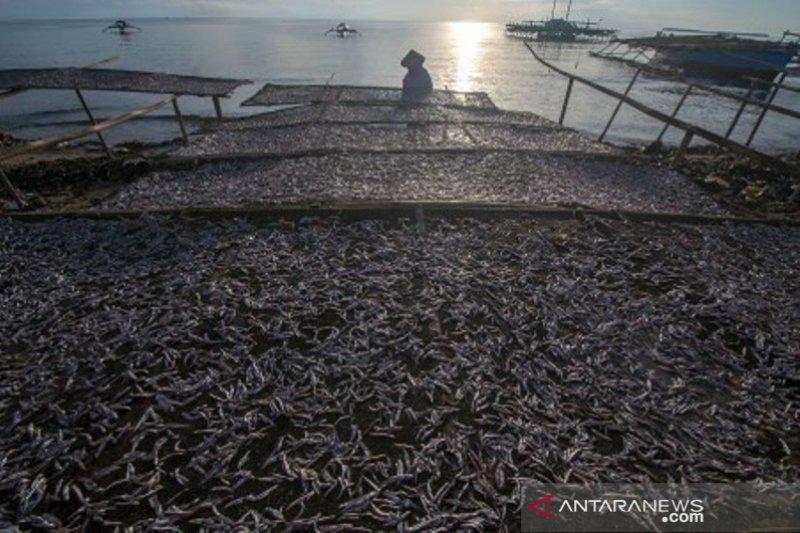 Harga ikan teri kering membaik