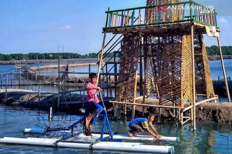 Menikmati konservasi mangrove sambil bersepeda