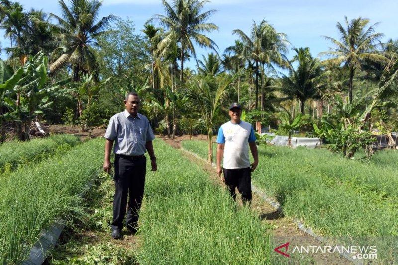 Pemkot Sabang meremajakan 50 hektare kebun cengkih