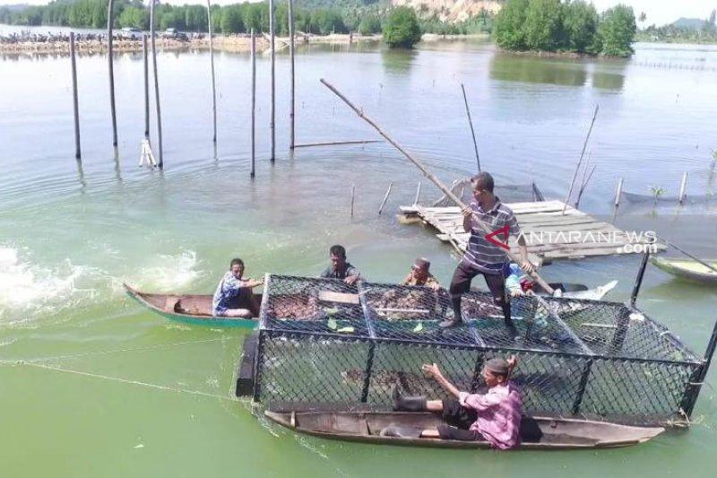BKSDA kandangkan buaya tangkapan asal Aceh Jaya