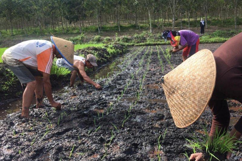 Daya beli petani di Kepri meningkat selama Juni 2019