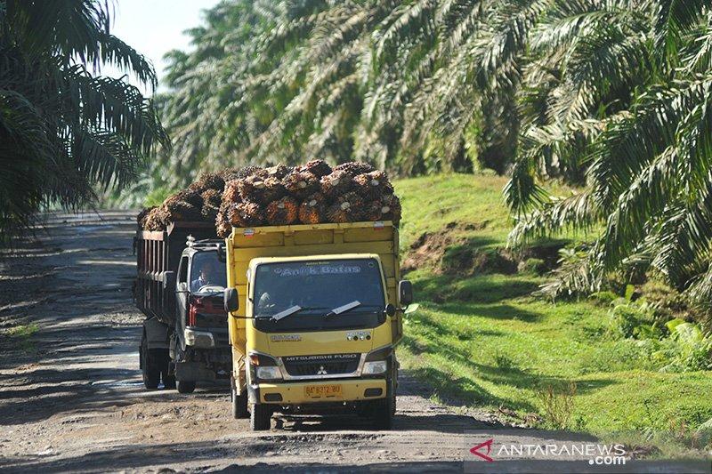 Petani perlu perdalam hasil riset peningkatan produktivitas sawit