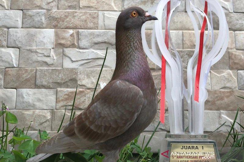 Burung merpati asal Bandung terjual Rp1 miliar