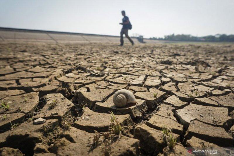 Lahan pertanian di Dlingo terdampak kekeringan akibat kemarau