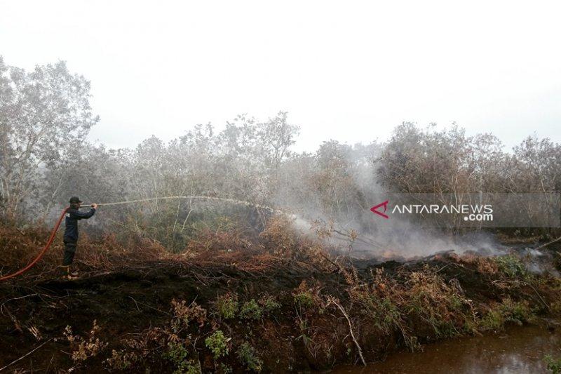 Kebakaran hanguskan empat hektare lahan di Penajam