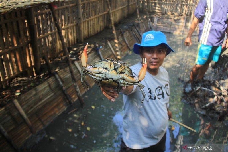 Legislator nilai pengembangan budidaya kepiting di Seruyan belum maksimal