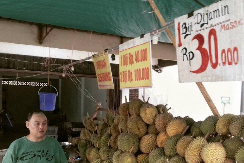 Pulau Bintan panen durian