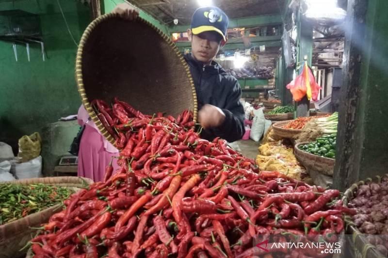 Di Padang turun, harga cabai di Solok justru mendekati Rp100 ribu per kilogram