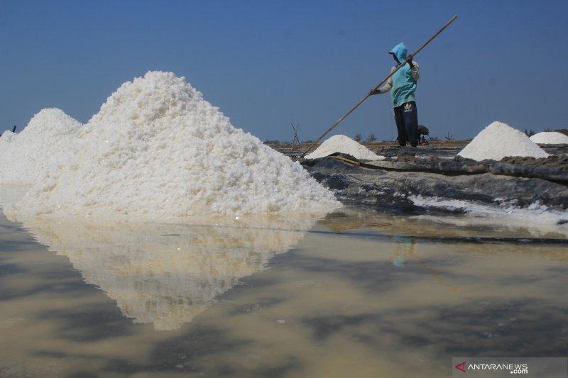 Kemenko Maritim usulkan garam masuk kebutuhan pokok