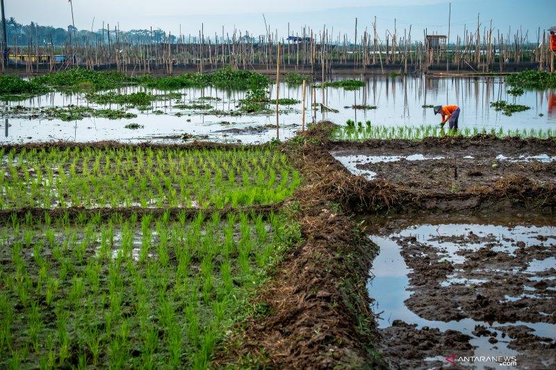 Kementan minta optimalisasi lahan rawa di saat musim kemarau