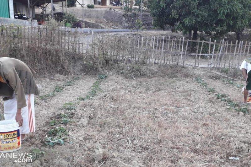Ratusan hektare lahan pertanian di selatan Sukabumi kekeringan