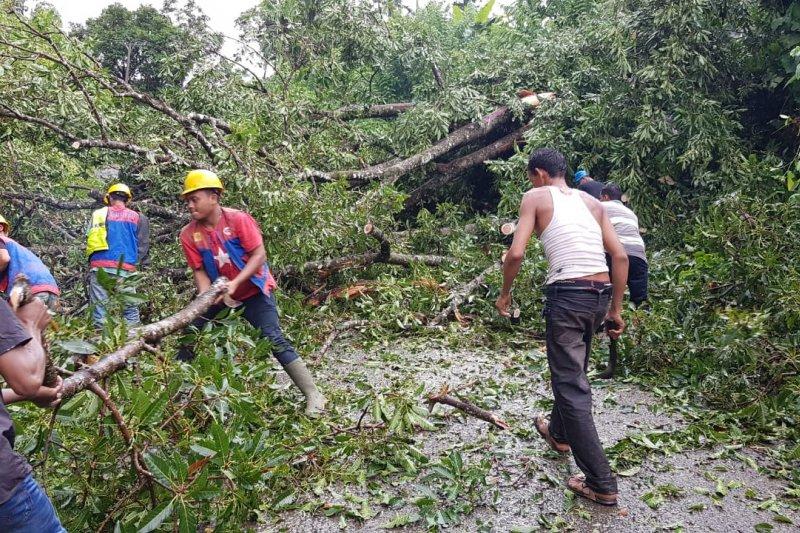 Hujan es dan pohon tumbang melanda Aceh Besar