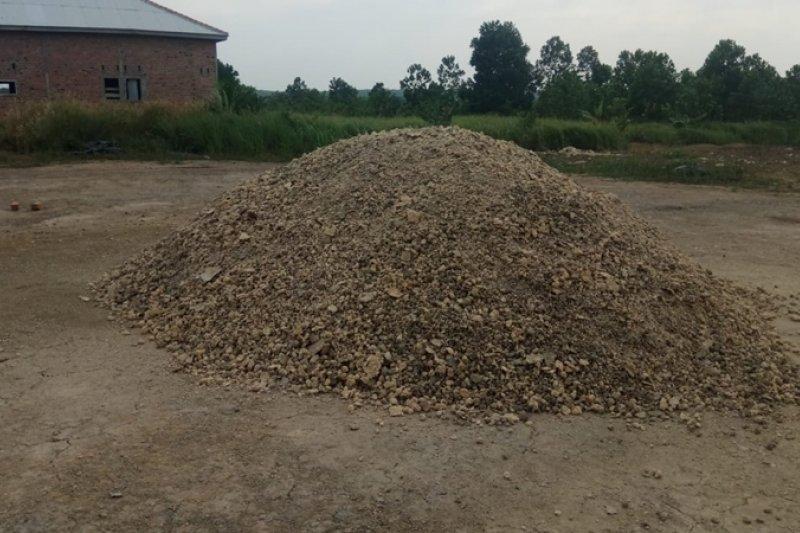 Harga singkong di Lampung capai Rp1.100/kg