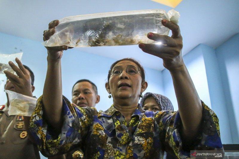 Menyelematkan triliunan rupiah  dari selundupan benih lobster