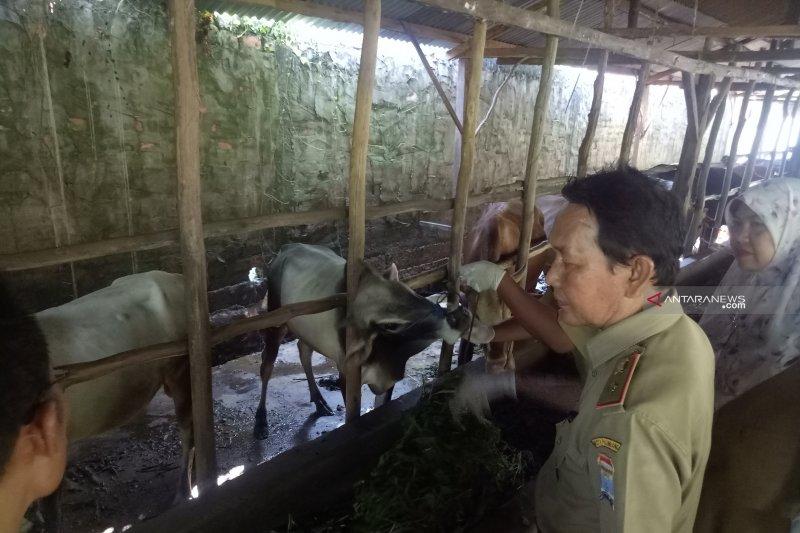 Pemkot Palembang ingatkan peternak qurban waspadai dampak kemarau