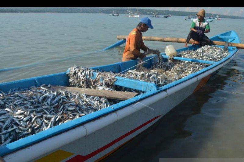 BPSPL jelaskan video viral ikan