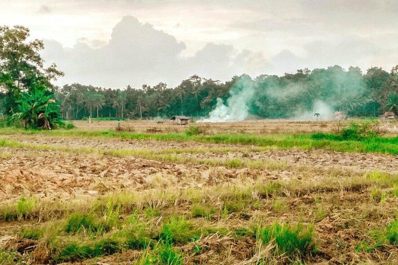 Memasuki masa tanam harga gabah di Lampung Timur naik