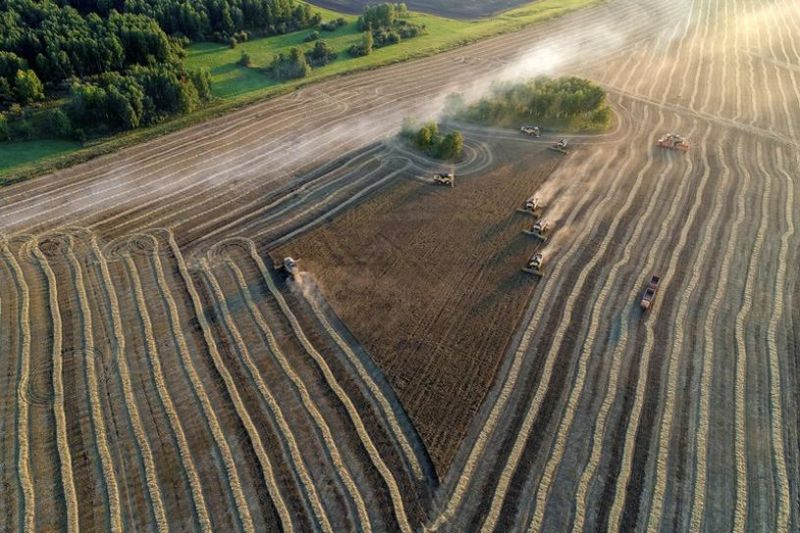 """Rusia bidik """"skenario optimis"""", panen gandum tahun 2035"""