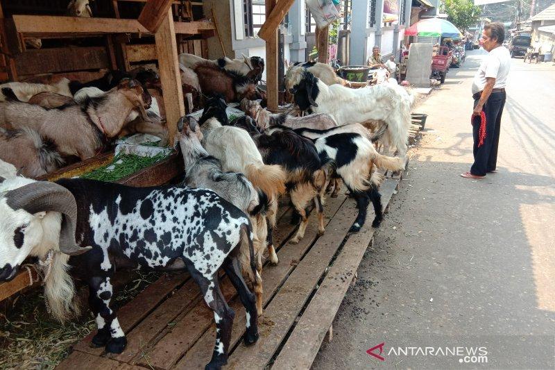 Pedagang kambing berkisah tentang pemulung beli hewan kurban