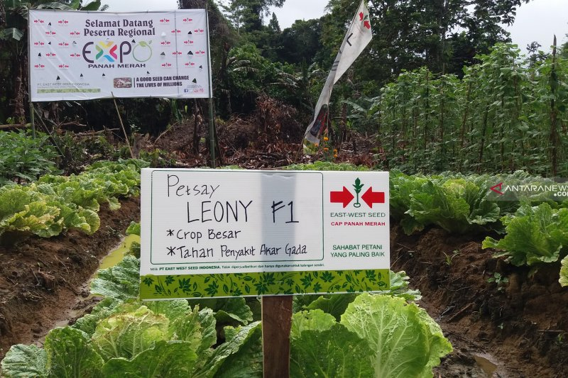 Papua Barat diminta gunakan DAK irigasi tepat sasaran