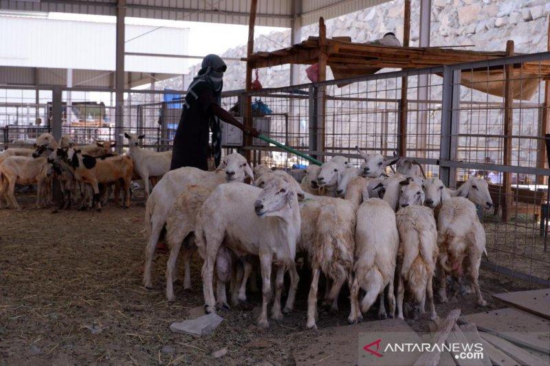 JCH Koter BTH 18 berburu kambing pembayar dam