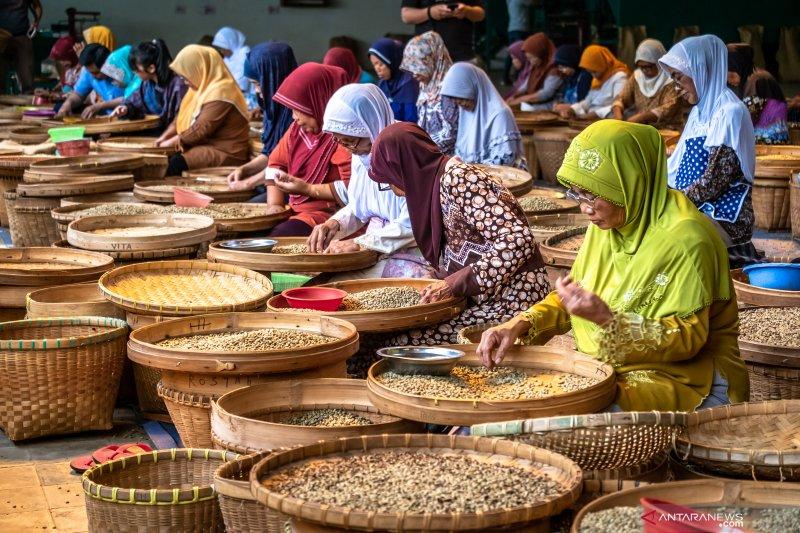 Proyeksi panen raya biji kopi PTPN IX