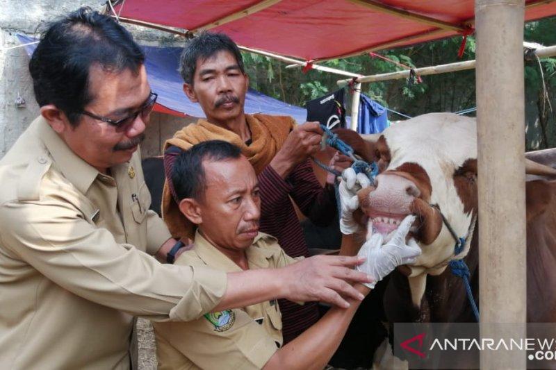 Dinas Ketahanan Pangan Kota Tangerang tingkatkan pengawasan hewan kurban