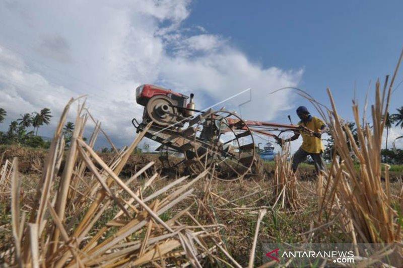 Produksi padi di Palu  pascagempa 1.928 ton