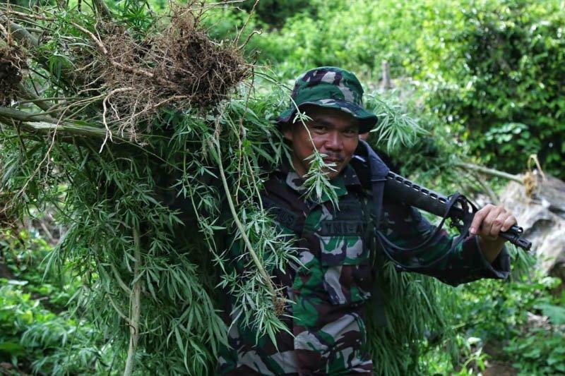BNN musnahkan dua hektare ladang ganja di Aceh Selatan