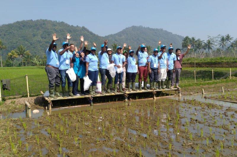 10 perwakilan dari lima negara Afrika pelajari sistem minapadi Indonesia